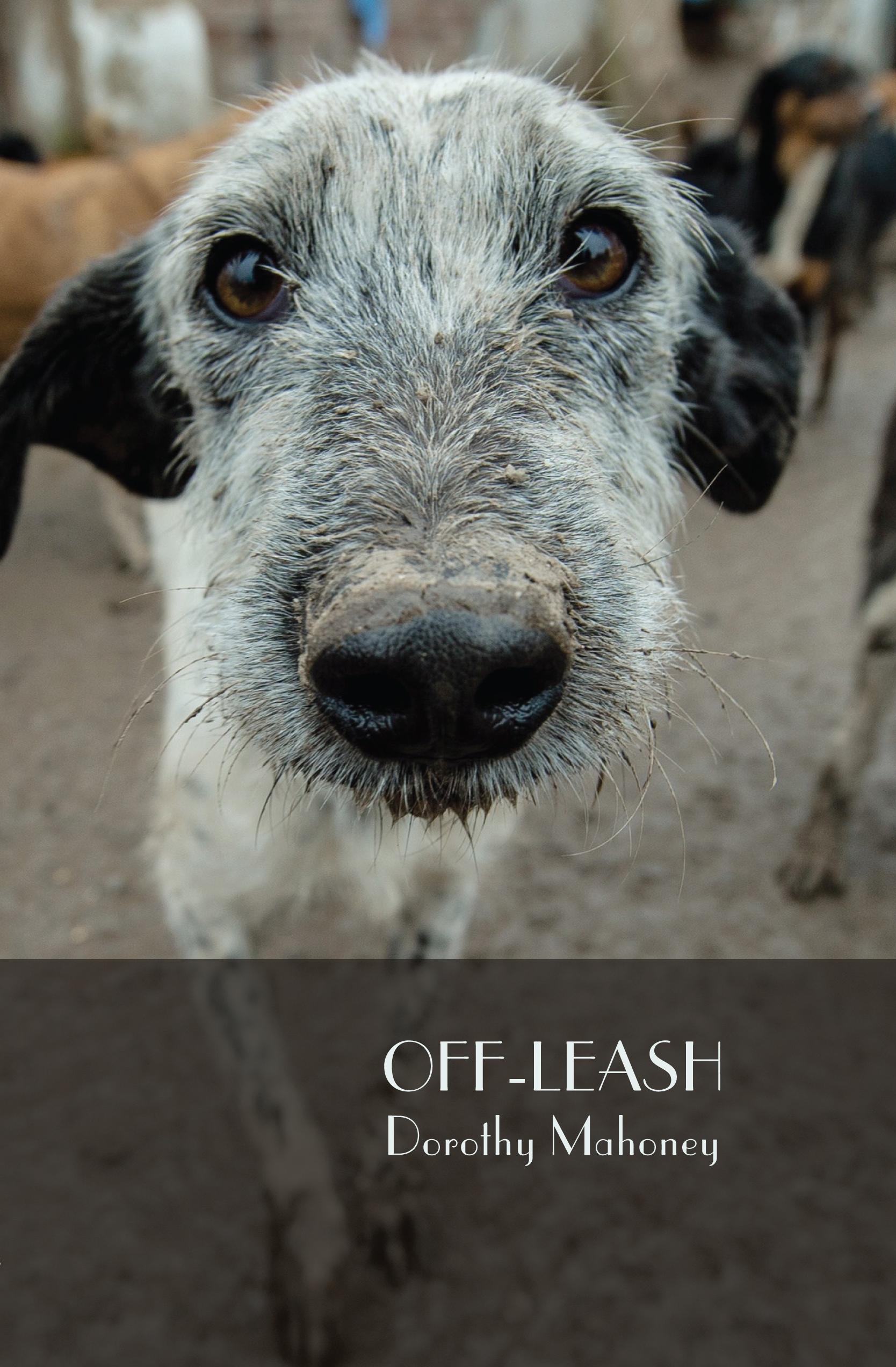 Off-Leash cover